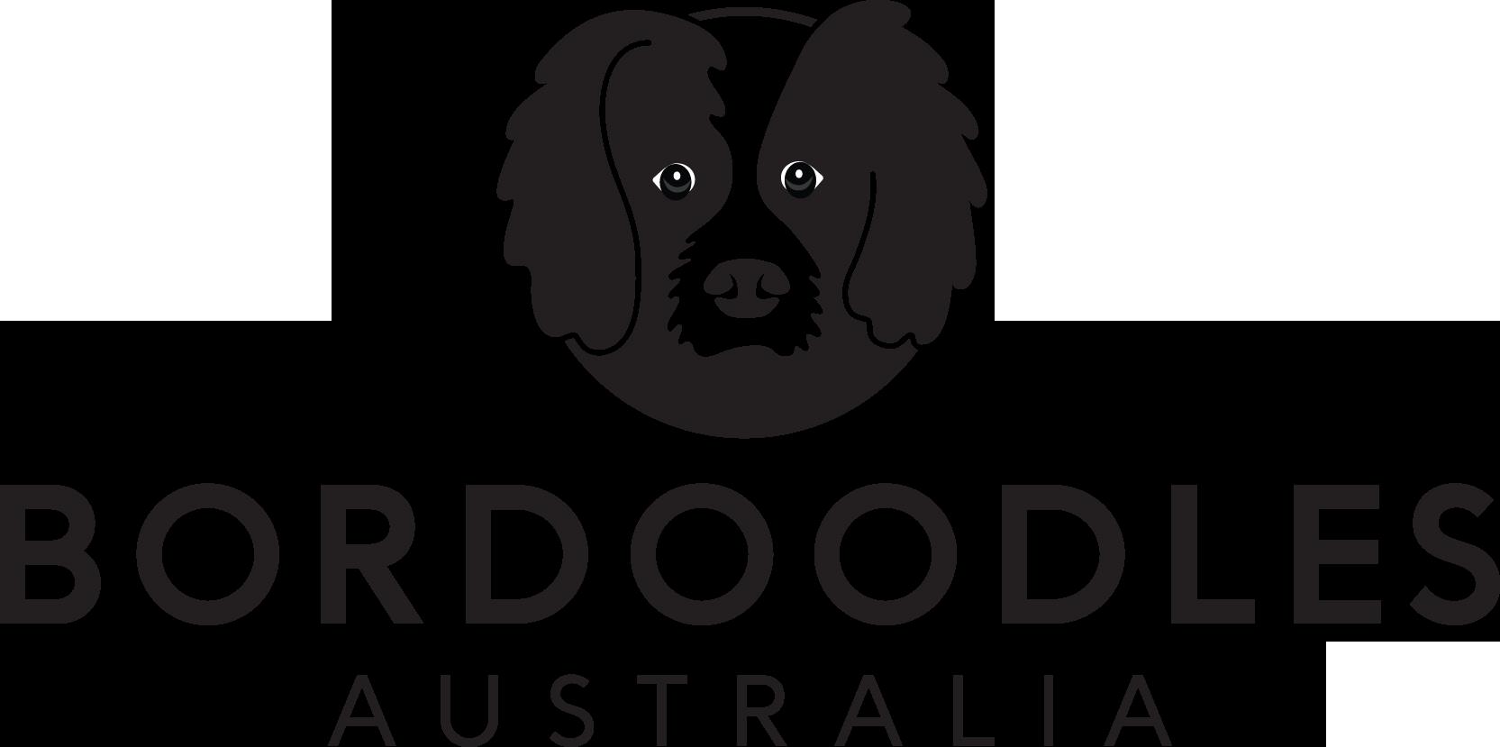 Bordoodles Australia